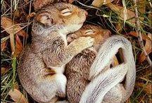 animales cute