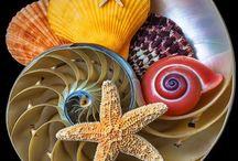 Shells &  Starfishes