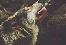 Animals | Pets