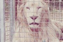 PROTECTION ANIMALE : cirques et zoos