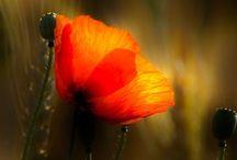 Blumen-Flowers