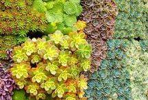 SUCCULENTE / Le piante grasse o succulente sono facili da mantenere e hanno bisogno di sole...