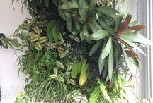 Flora vertical / Jardins verticals, terraris i Kokedamas amb Sphagnum.