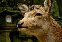 Nara(Japan)