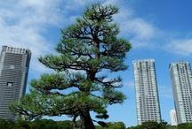 Garden&Park in TOKYO