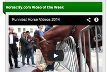 Horsecity Video / Top horse videos of all time, best western horse videos, best english horse videos