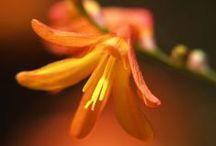 Flowers / macro shots of flowers