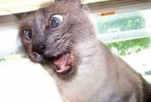 FUNNY ANIMALS / Смешные кошки, забавные животные, приколы с животными, видеоприколы с животными, прикольные кошки, смешные собаки