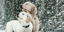 {Pups & Doggies} / What is cuter or more beautiful than our pups and dogs!??