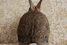 {Rabbit Tales & Bunny Hops} / Some funny bunnies and regal rabbits....