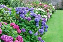 kert, udvar / garden