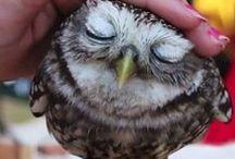 bumin / #owl #baykuş