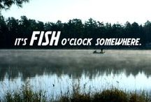 Wat is vissen toch mooi!