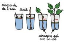Science - Les Plantes / by Nathalie Gosselin