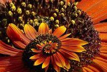 Virágok, így is, úgy is!