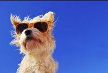 Blog de Mikan / Les articles et les conseils du blog de Mikan, pour prendre grand soin de votre animal : à retrouver sur https://www.mikan-vet.com/blog Tout sur Mikan, le laser thérapeutique animal,  la physiothérapie et la rééducation, l'orthopédie et le bien-être animal.