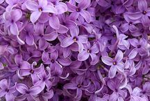 Purple Passion / All things PURPLE