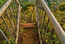 HAWAII / All things Tropical