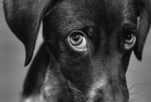 B&W Dog / by Barkingstud.com