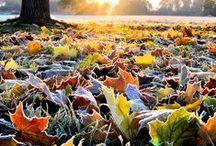 My beloved Autumn