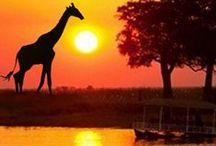 Afr.(S): S. Africa, Namibia, Botswana, Lesotho, Swaziland