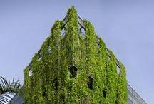 Green Walls / Elewacje zielone