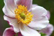 Flowers / Miscellaneous