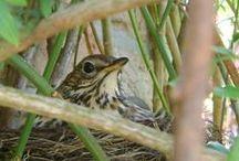Birds in our garden / Photographs I took of birds in our garden