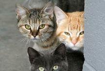 Kočky, kočičky...