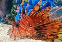 Here Fishy, Fishy! / The fish that live in RumFish Grill's tanks