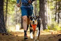 New Fall Winter 2014 Products / Here's a glimpse of what is new in performance outdoor dog gear this fall.