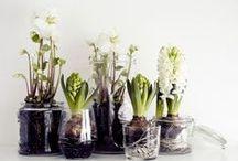 Arrangements floraux / Bouquets, succulentes et autres plantes vertes ou fleuries