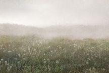 Paysages et nébuleuses...