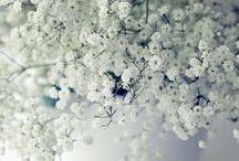 Herbes et fleurs...
