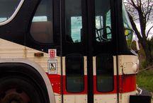 TTC Buses