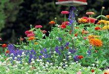 Fleurs et Jardins / by patou lacombe