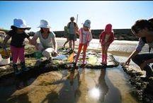 A la découverte de la nature / Partez à la découverte de la réserve naturelle du marais d'Yves qui longe Châtelaillon-Plage ou à la pêche à pied le long de l'estran