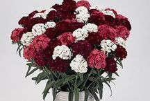 Interior decor / How to use summer flowers in your house and office decor