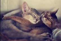 LoveCats / by Shirley Bee