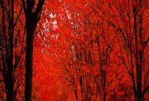 Fall <3 / by Ashley King