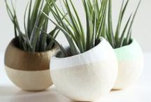 PLANTS / Plants and planting paraphernalia / by Lifeblooming.com
