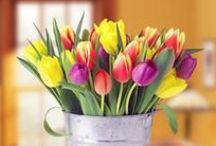 Springtime / The time has come to say farewell to winter and say hello to the vibrant floral colors of spring. Here are some of Blossom Flower Shops' favorite things about the season! http://www.blossomflower.com/flowers/spring-flowers-yonkers-white-plains/