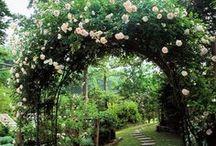 Trädgårds ideér