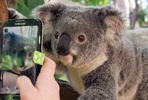 Amazing Australia / http://songotra.inspireworthy.com