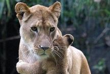 Wonderful Wildlife in Africa