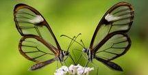 Fluturashi