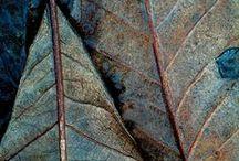 Texture | Patina
