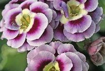 Flowers / by Nancy Carroll