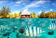 Tahiti Luxury Resorts / Our favorite Tahiti Luxury Resorts.
