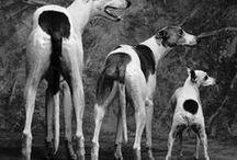 Dogs Italian Breeds / Fotografie, dipinti e documenti storici sulle 16 razze canine italiane ufficialmente riconosciute.